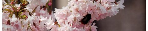 cropped-blossoming-bee1.jpg