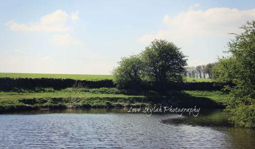 Waterway & Tree.jpg