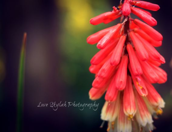 Orange Flora